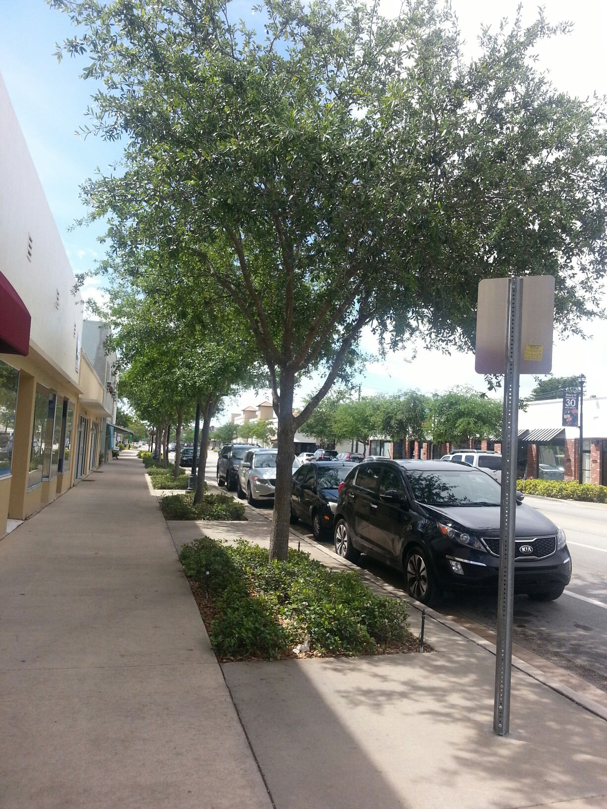 Streetscape To The North Of Hickory Click To Close: Streetscape Committee – Tree Canopy 6/4/2015